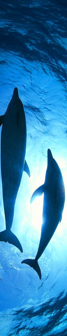Dolphins. Say no to marine parks. Let the Dolphins live free of captivity!