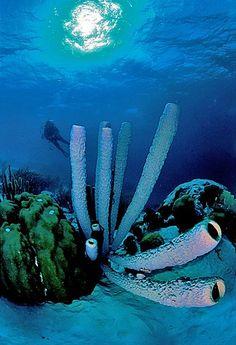Bonaire diving, Dutch Antilles