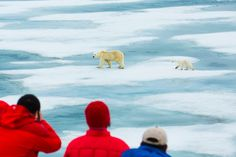 Picture of tourists watching two polar bears crossing sea ice in Norway
