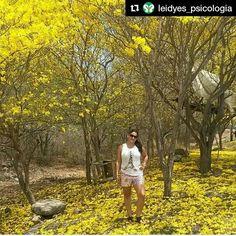 """Foto de @leidyes_psicologia Día de nuestro árbol nacional . #ccs #caracas #caminacaracas  El 29 de mayo de 1948 se declara el #araguaney #ÁrbolNacionalenVenezuela.  Con la hermosa frase """"La primavera de oro de los araguaneyes"""" identificaba Rómulo Gallegos la llegada de la primavera en los llanos y sabanas de #Venezuela. La floración se presenta durante los meses de febrero a abril cuando está totalmente desprovisto de hojas. #leidyes_psicologia #undiacomohoy"""