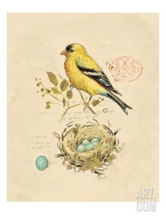 Gilded Songbird II Collections Art Poster Print by Chad Barrett, Bird Prints, Framed Art Prints, Fine Art Prints, Framed Canvas, Bird Canvas, Canvas Art, Art And Illustration, Vintage Prints, Vintage Art