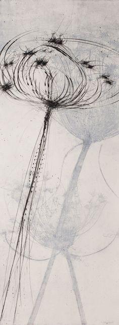 Ammi_majus-2011-vernice_molle-puntasecca-bulino-29x80