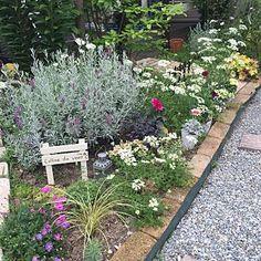女性で、4LDKの、Bedroom/植物/ガーデニング/ガーデン/手作りの庭/砂利の小道DIY/作業用レンガの小道/芝生の庭から草花木果の庭へについてのインテリア実例。 「今日買ってきた花の苗...」 (2016-05-24 07:52:51に共有されました)