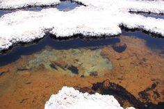 Stromatoliths in the Salar
