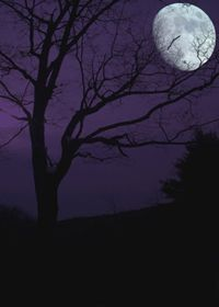 scary trees at night - Google Search