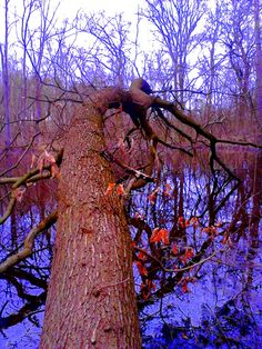Fallen tree II.