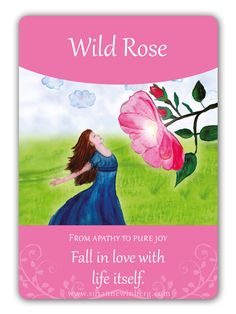 Wild Rose - Bach Flower Oracle Card by Susanne Winberg. Message: Fall in love with life itself.