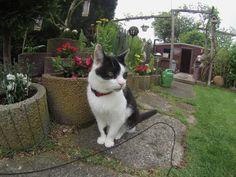 Thommy Katze Cat