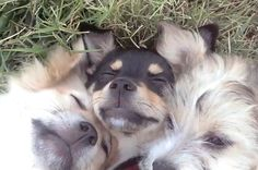 This Video Of Dogs Cuddling Will Make Your Day