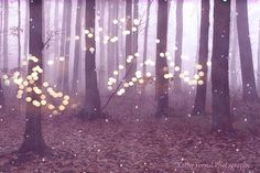 Nature Photography Fantasy Sparkling Fairy Lights Nature