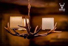 Die 10+ besten Bilder zu Geweih Lampe | geweih lampe, geweih