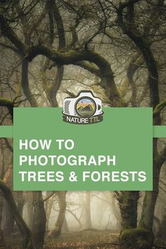 How to Photograph Trees and Forests // Learn how to capture beautiful images of woodlands on camera. // trees, forest, woodland, landscape photography, photography tips, autumn, landscape