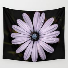 Buy Daisy Mauve Wall Tapestry by xiari_photo. Worldwide shipping available at Society6.com. Just one of millions of high quality products available.#tapestry #wall #daisy, #mauve, #purple, #white, #violet, #indigo, #drop, #water, #flower, #nature, #natural, #garden, #outdoor, #backyard, #black, #background, #petals #bloom, #spring, #season, #happy, #central, #blue, #flowers, #head, #wet, #photo, #photography, #nikon, #dslr