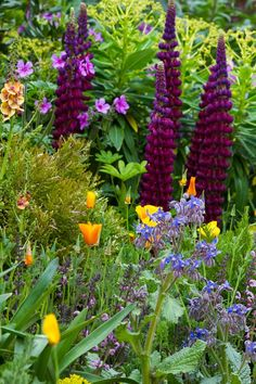 Close up of Arthritis Research UK Garden at RHS Chelsea Flower Show 2013. Picture Richard Jane.