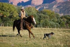 The Stumpy Tail shares its early history with the Australian Cattle Dog – both were developed by 19th-century Australian farmers to protect, herd and drive livestock over long distances. The difference between them is that unlike the Australian Cattle Dog, the Stumpy Tail has no Kelpie blood.