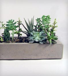 Indoor plants pictures - cozy decoration ideas with potted plants - Garden Design Ideas Green Plants, Air Plants, Potted Plants, Indoor Plants, Indoor Garden, Outdoor Gardens, Plant Pictures, Cactus Y Suculentas, Concrete Planters