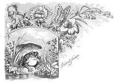 Free Antique Clip Art - Frog with Butterfly Engraving - The Graphics Fairy