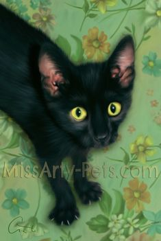 Black Cat Series. This is Scaredy!