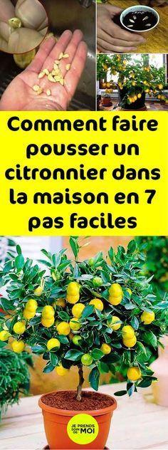 Comment faire pousser un citronnier dans la maison en 7 pas faciles Garden Deco, Diy Garden, Garden Toys, Landscaping Company, Yard Landscaping, Organic Gardening, Gardening Tips, Indoor Gardening, Organic Weed Control