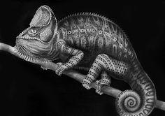 "Chameleon. Pen & Ink on paper 11x17"""