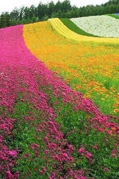 ☆Beautiful nature Farm Tomita Star of Japan Stunning sunset Wyoming , USA Beautiful World, Beautiful Gardens, Beautiful Places, Spring Flowers, Wild Flowers, Flowers Garden, Flower Iphone Wallpaper, Dream Garden, Champs