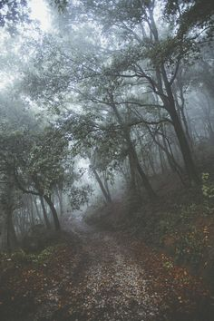 Foggy,back road journey into the woods.