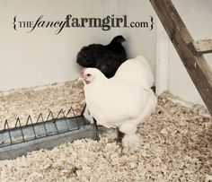 This inspires me to get creative with the interior portion of the coop...