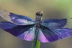 Rainbow on feathers of a dragonfly.  I'm  fascinated by its beauty and splendor.