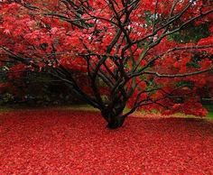 Stunning, I want a tree like this.