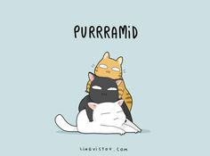 8 Cat Puns That Will Put a Smile on Your Face - BlazePress                                                                                                                                                                                 More