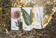 Rain Perfume packaging - Atelier Design Studio