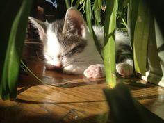 The CAT Association - Google+