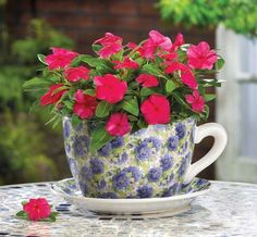 reusing one of a kind tea or coffee mugs to hold a plant