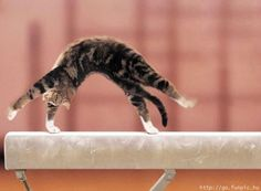 Gymnastics Cat! http://media-cache4.pinterest.com/upload/220535712972331789_BMxTqWAB_f.jpg mikaylajayne awwwe some