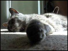 This is my three legged cat Miles!