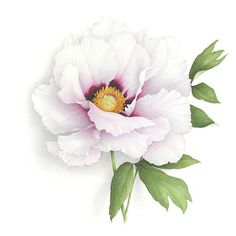 Watercolor Vincent Jeannerot. White Peony