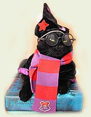Enrolled at Hogwarts School for Magic cats!