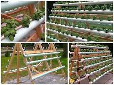Resultado de imagen para microhuertas familiares Hydroponic Farming, Aquaponics System, Hydroponics, Agriculture Projects, Le Hangar, Smelling Flowers, Trees And Shrubs, Do It Yourself Home, Back Gardens