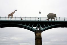A place where we can keep elephants and giraffes for pets.
