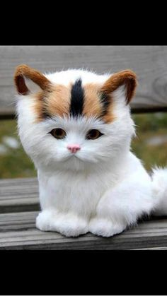 pic.twitter.com/ZLY1pRfAx9 Is this a stuffed kitty or is it a real kitty? pls could you give your thoughts?
