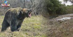 Um idoso de 83 anos foi atacado por um urso, mas se defendeu com sua bengala e conseguiu fugir.