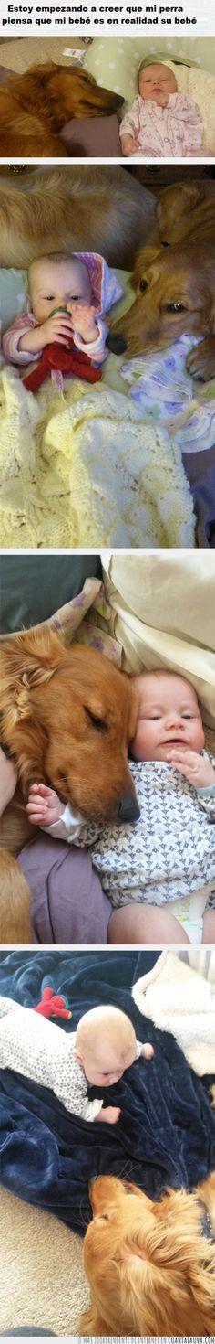 Amor canino, pocas cosas hay más parecidas al amor de madre