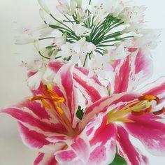 A little gift from the garden  #garden #gardengirl #greenfingers #flowers #flowerstagram #floweroflife  #floweroftheday #lily #lilies #agapanthus #freshflowers #freshcut #freshcutflowers #igersbirmingham #birmingham #birminghamuk #nature #ig_flowers #ig_garden #ig_nature #lovemygarden #pink #white #beautiful #lovegreatbritain http://misstagram.com/ipost/1566881035958287559/?code=BW-rgAhlvzH