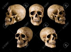 skull different angles - Google Search