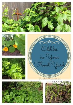 Ever considered an edible front yard? Here are tips and resources for planting one. Grow more food!