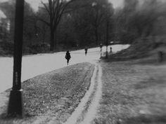 Central Park  New York, NY  2012  Photo by Carlos Detres  https://www.facebook.com/carlosdetresphoto