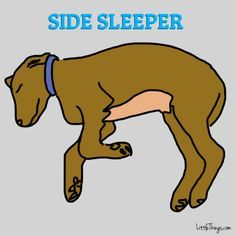 Dogs who sleep in this position tend to be happy-go-lucky and fiercely loyal.