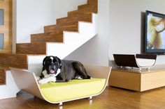 Modern and Contemporary Pet Products Updated Daily - CoolPetProducts.com