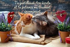 Image Citation, Positive Affirmations, Sweet Dreams, Good Night, Kitty, Positivity, Messages, Animals, Solution