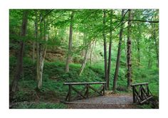 Betliar - Park 7 Outdoor Furniture, Outdoor Decor, Bench, Park, Plants, Home, Ad Home, Parks, Plant